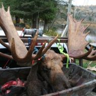 moose hunts 13