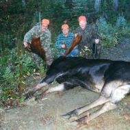 moose hunts 15