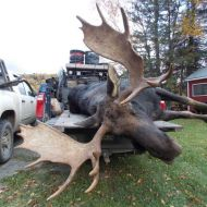moose hunts 19