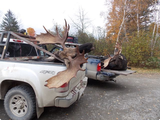 moose hunts 20