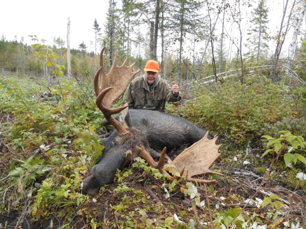 Trophy Moose Hunting in Maine